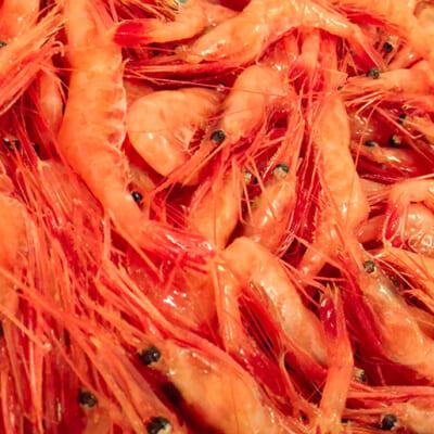 上品な風味の出汁が取れる「南蛮海老」