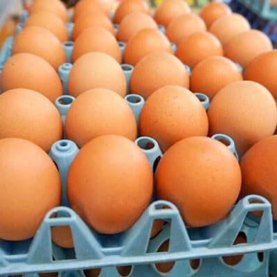 快適な環境で良質な卵を生産