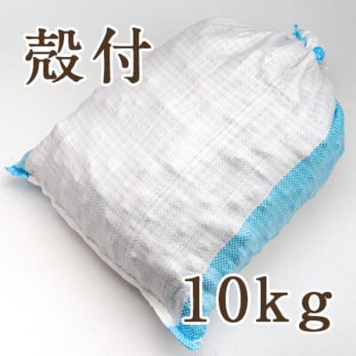 魚沼産 鬼クルミ(殻付)10kg