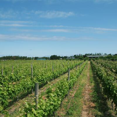 風土を活かしたワインを醸造する「カーブドッチ」