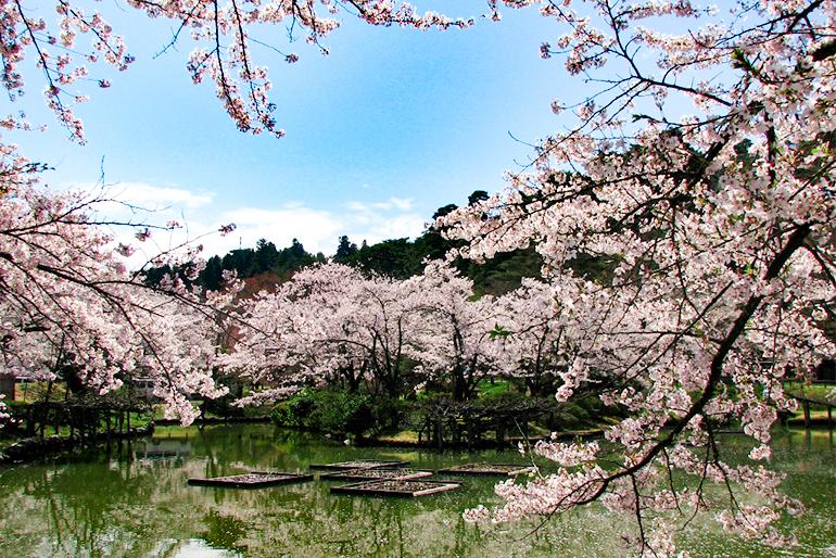五泉名物の桜を「食」でも楽しめるうどん