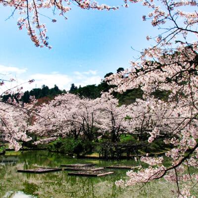 約3,000本もの桜が咲き誇る名所「村松公園」