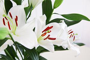 3.【美しく飾るために】花粉を取り除く