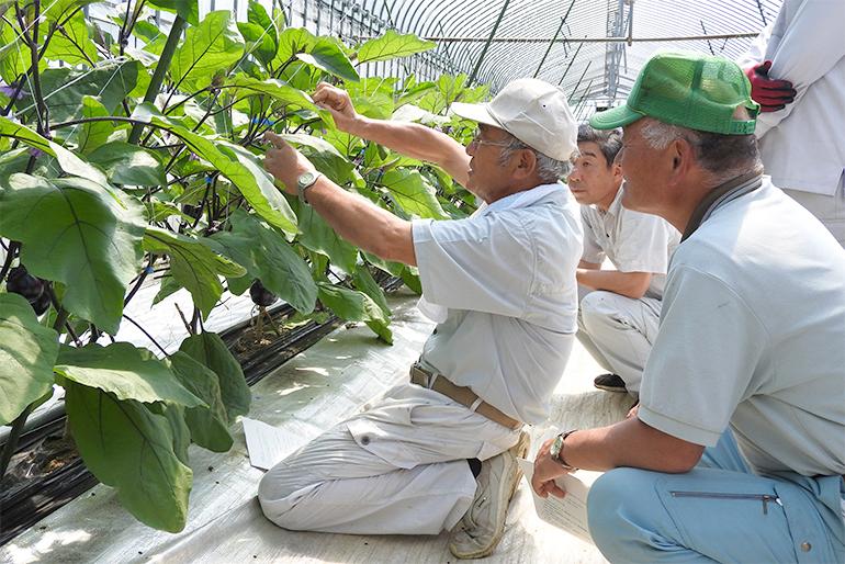 エコファーマーが豊かな自然を活かして栽培