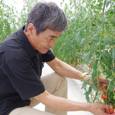 2019年新潟春トマトの品評会で第1位に輝いたトマト
