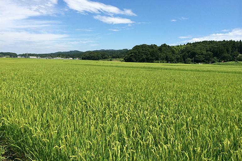 地元の水と米を生かした酒造り