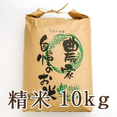 新潟産こしいぶき 精米10kg