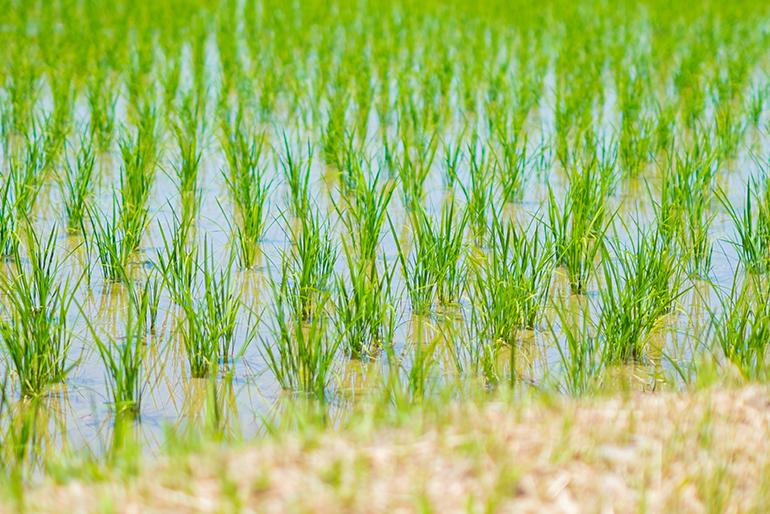 豊富な水源に支えられた新潟市北区