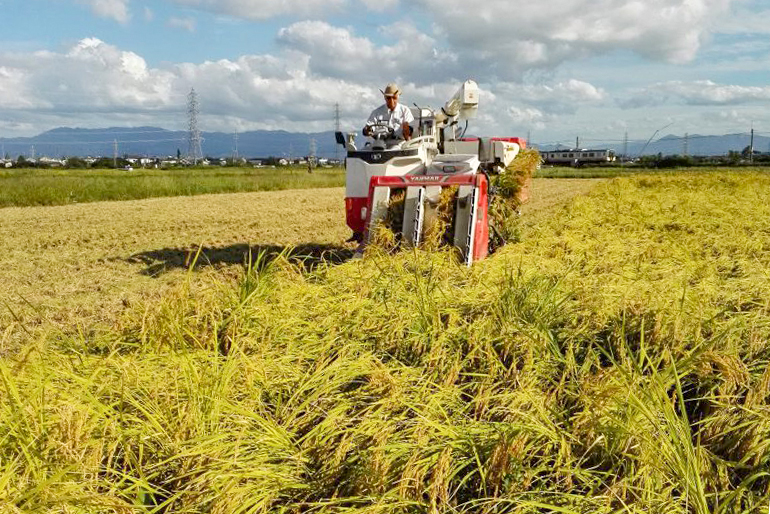 健康な稲が実らせる味わい深いコシヒカリ