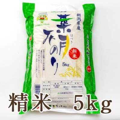 新潟県産 葉月みのり 精米5kg