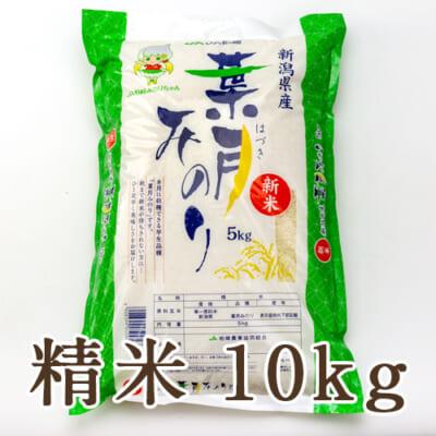 新潟県産 葉月みのり 精米10kg