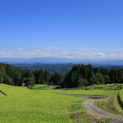 うま味たっぷりのお米を育む棚田