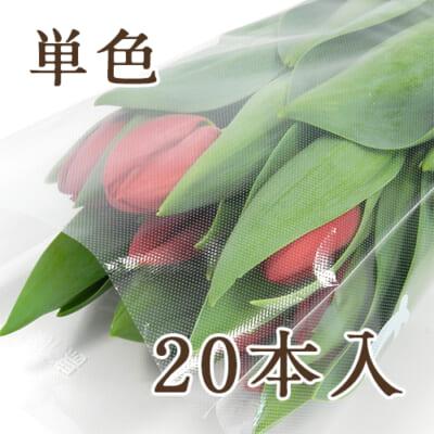 チューリップ(切り花)20本入り