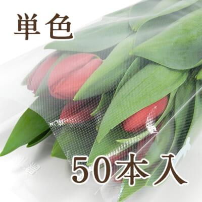 チューリップ(切り花)50本入り
