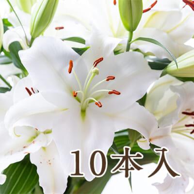 ユリ(切り花)10本入り