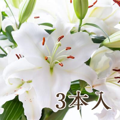 ユリ(切り花)白 3本入り