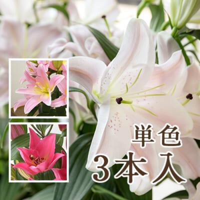 ユリ(切り花)ピンク 3本入り