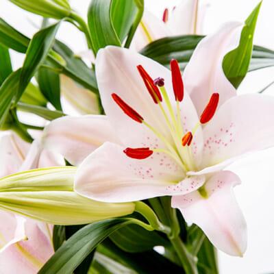 新潟で育つ美しい花