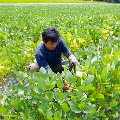 枝豆の旨みを引き出すこだわりの栽培方法