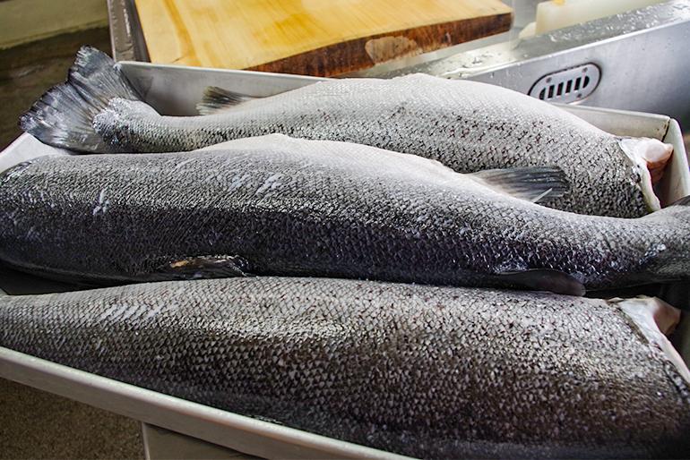 郷土の味・鮭文化を伝えたい