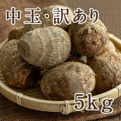 【訳あり】長岡産 里芋 中玉 5kg