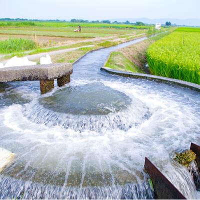 豊富な水と肥沃な大地で育つお米