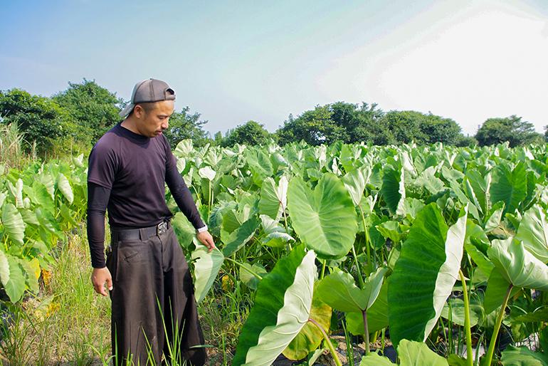 極上里芋が育つ肥沃な土壌と施肥