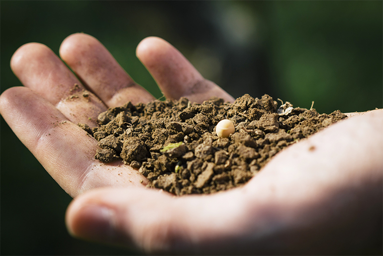 安心・安全で栄養抜群の堆肥で育てる