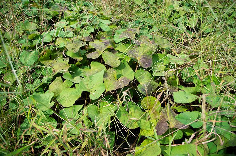 植物と土壌が持つ本来の力を引き出す農法