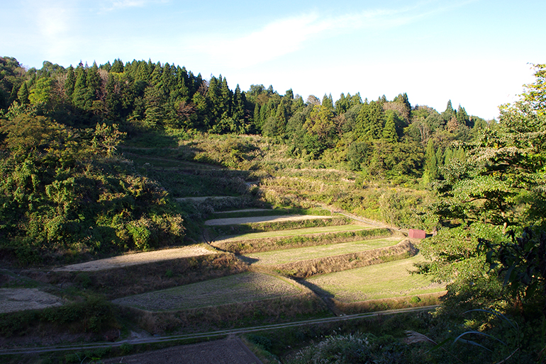 3.肥料いらずの肥沃な土壌