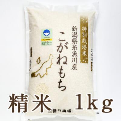 糸魚川産こがねもち 精米1kg