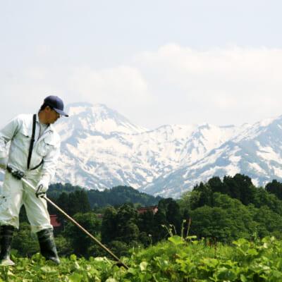 美味しいお米作りにぴったりの糸魚川市