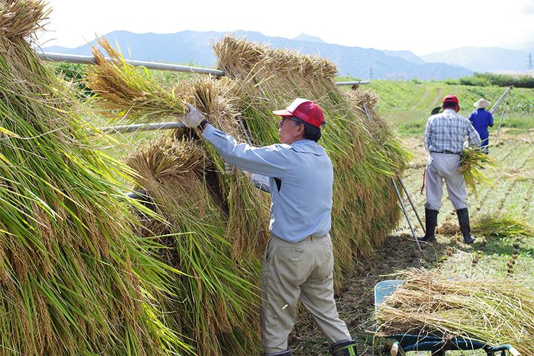 香りの良さが段違いの「稲架掛け米」