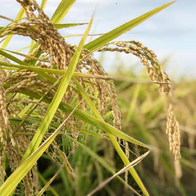 有機肥料を使った良質な土作り