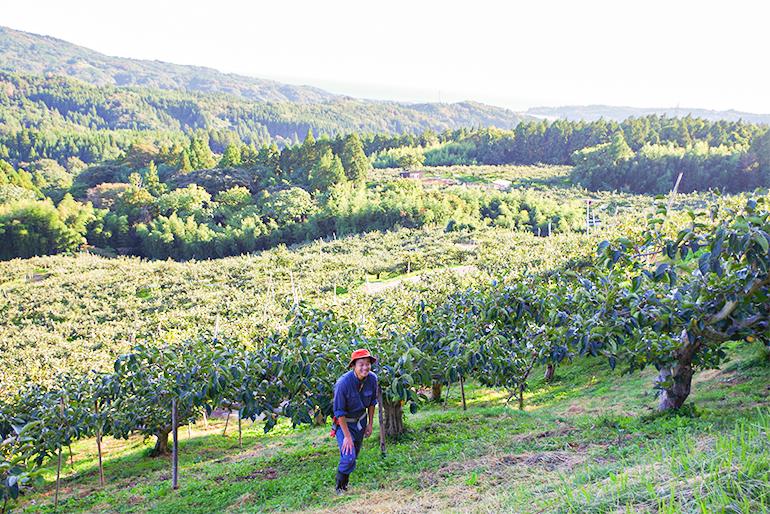 果樹の名産地として有名な佐渡・羽茂地区