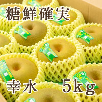 「天果糖逸」新潟県産 梨 幸水 糖鮮確実 5kg