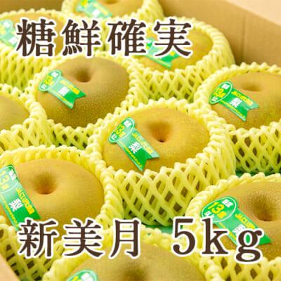 「天果糖逸」新潟県産 梨 新美月 糖鮮確実 5kg