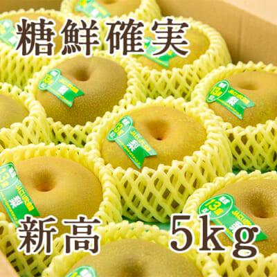 「天果糖逸」新潟県産 梨 新高 糖鮮確実 5kg