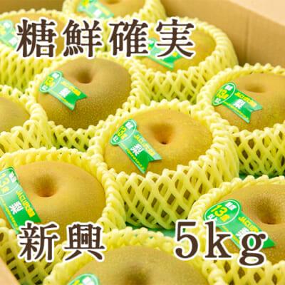 「天果糖逸」新潟県産 梨 新興 糖鮮確実 5kg