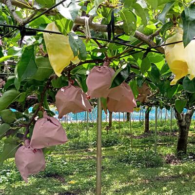 果樹が元気に育つ畑