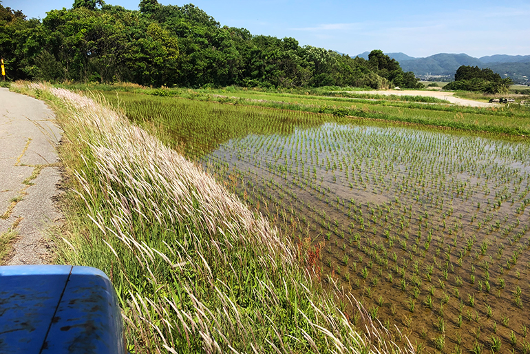 美味しいお米を育む条件がそろった佐渡の環境