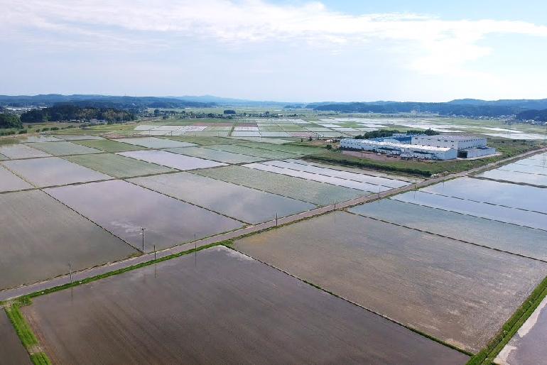 米作りに適した信濃川流域