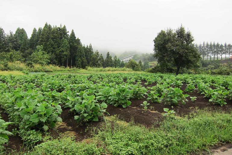 自社や契約農家で栽培したうま味の強いキャベツを使用