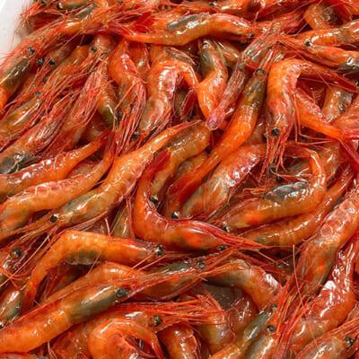 「海の宝石」と呼ばれるほど、赤く美しい姿