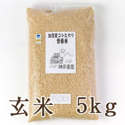新潟産コシヒカリ「雪椿米」(特別栽培・従来品種)玄米5kg