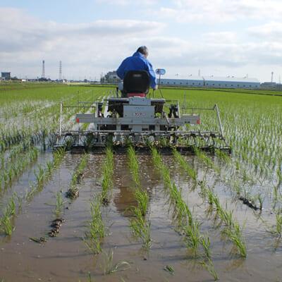食味の向上と、健康な稲の成長を重視した栽培