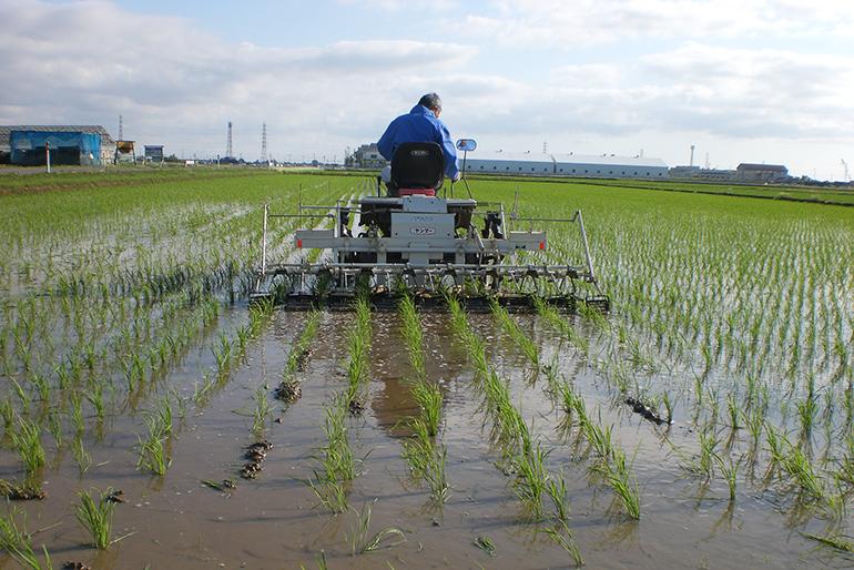 厳選した肥料を与え、お米の食味を高める