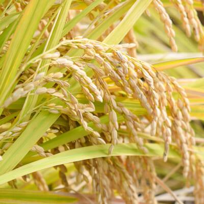 有機肥料を積極的に使用