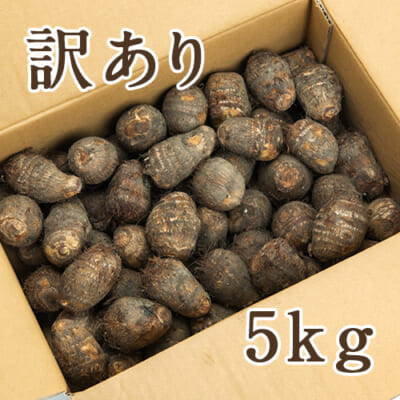 【訳あり】五泉産 里芋 5kg