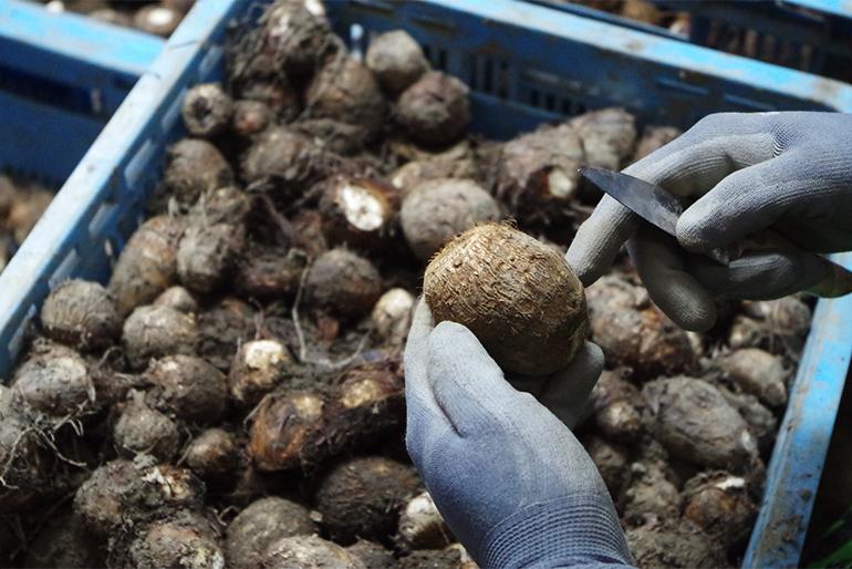 県内トップの生産量を誇る、五泉市の特産品